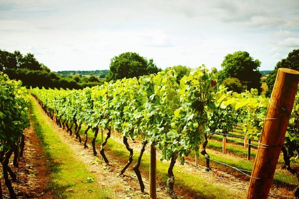 Croxsons Teams up with UKVA to Support UK wine industry