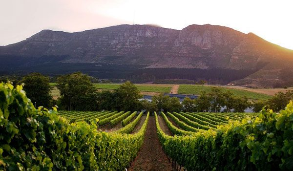 Top 10 wine farms in Cape Town