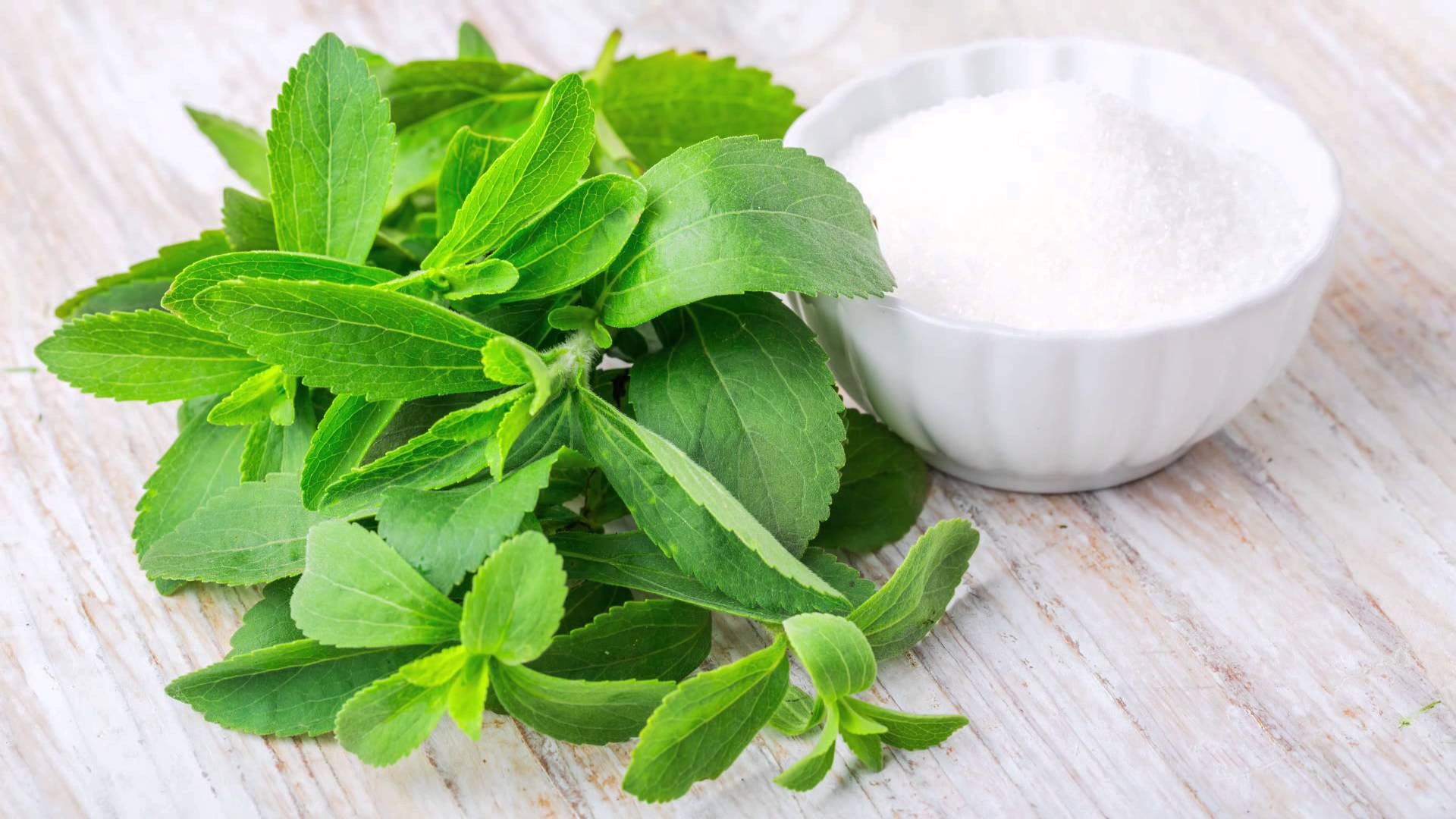 Stevia is The Future Treatment for Metabolic Syndrome Diseases, Studies Says