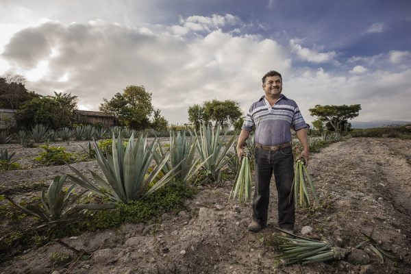 Maguey Melate – The Story Behind Spirit of Agave